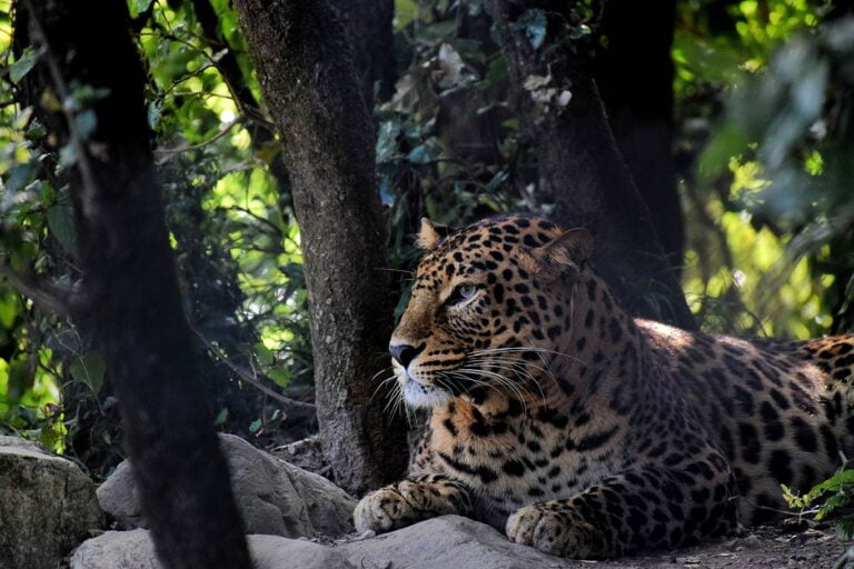 Jim Corbett National Park WildLife